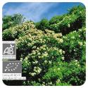 Aceite esencial de Árbol de té BIO 10 CC Pranarom