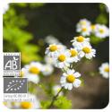 ACEITE ESENCIAL DE MANZANILLA ROMANA  BIO (CHAMAEMELUM NOBILE) 5 CC PRANAROM