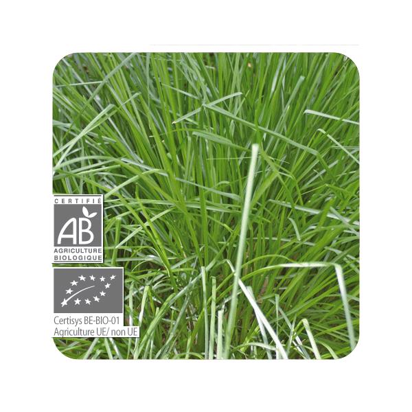 ACEITE ESENCIAL DE PALMAROSA BIO (CYMBOPOGON MARTINII) 10 CC PRANAROM