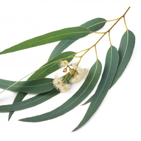 Complementos naturales con eucalipto